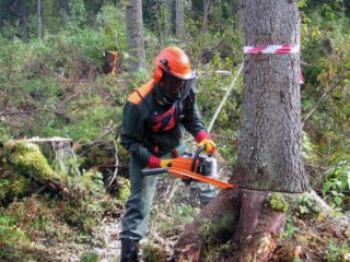 Попался на вырубке леса
