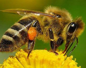 Укусы насекомых. Оказание помощи
